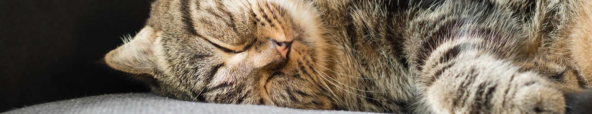 cat eyes shut on sofa