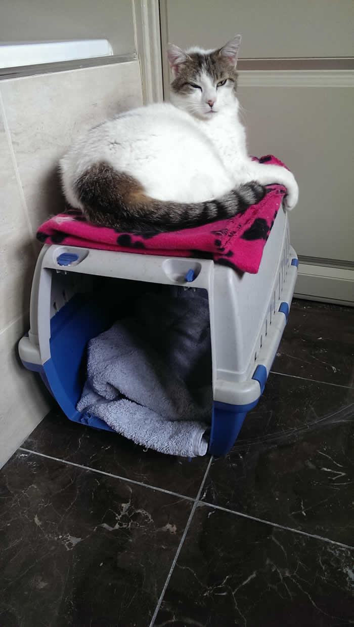 cat on a basket at Cottage Vets