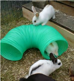 rabbits and hoop
