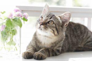 kitten and flowers on windowsill