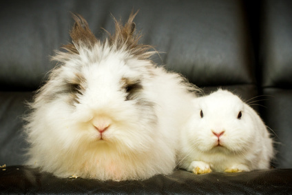 rabbits on sofa