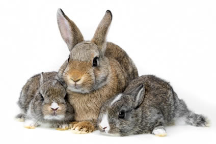 rabbit and babies