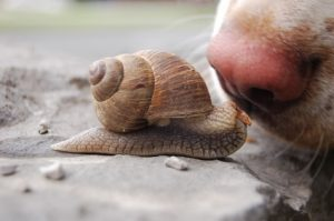 snail and dog
